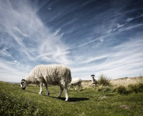 They were so tame in the Peak District